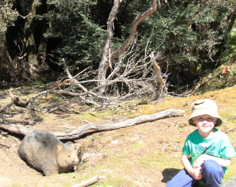 Bush Tucker Man Jnr decided that cooking Wombat Mignon in a Wilderness World Heritage Area would be problematic.