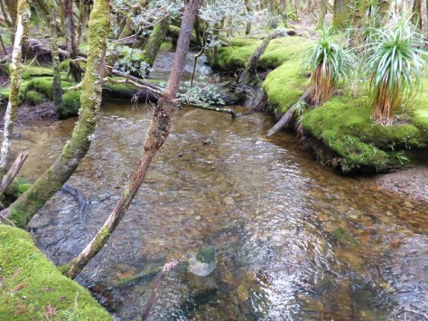 Cephissus Creek near Pine Valley Hut