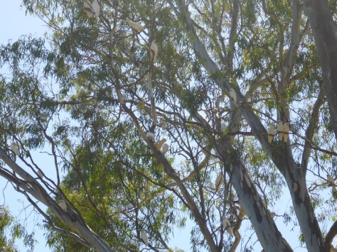 We saw heaps of birds along the way
