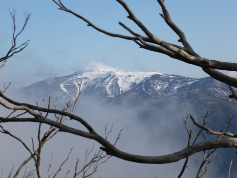 Mount Buller isn't far away
